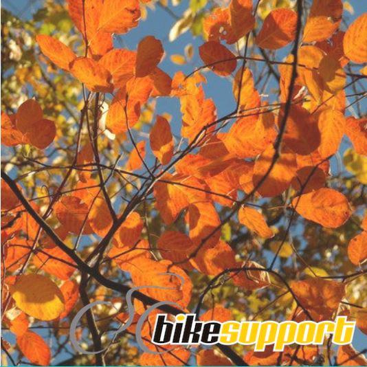 El otoño en bicicleta